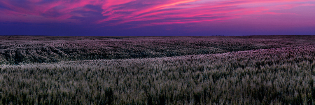 Fields of Fire | Sean Schuster Fine Art Photography