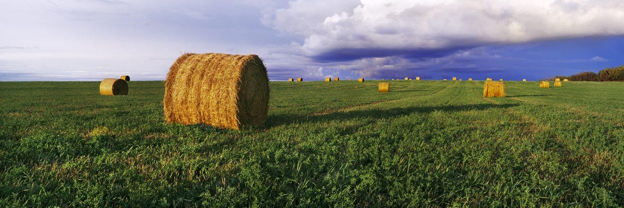 Prairie Gold | Sean Schuster Fine Art Photography