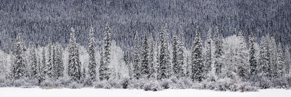 Sean Schuster Fine Art Photography Canada | Arctic-Frost-Sean-Schuster