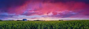 Sean Schuster Fine Art Photography Canada   Pink-Rain