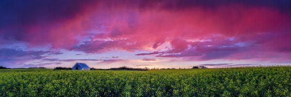 Sean Schuster Fine Art Photography Canada | Pink-Rain
