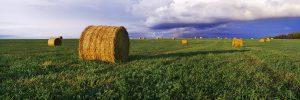 Sean Schuster Fine Art Photography Canada | Prairie-Gold