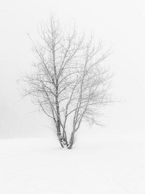 Sean Schuster Fine Art Photography Canada | Solitude