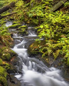 Sean Schuster Fine Art Photography Canada | Eternal Springs