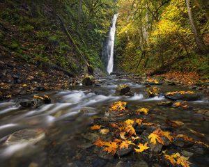 Sean Schuster Fine Art Photography Canada   Autumn Gold